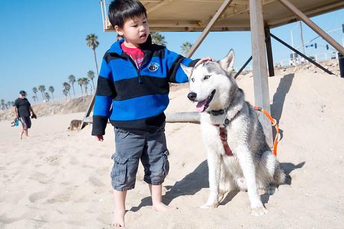 dogbeach22