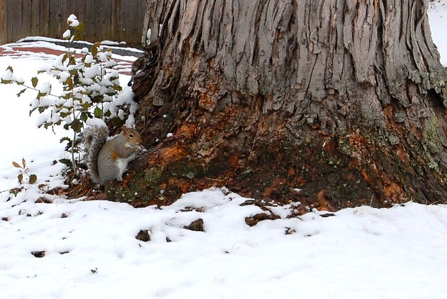 Squirrel, tree, snow… #FamiliaLubriderm