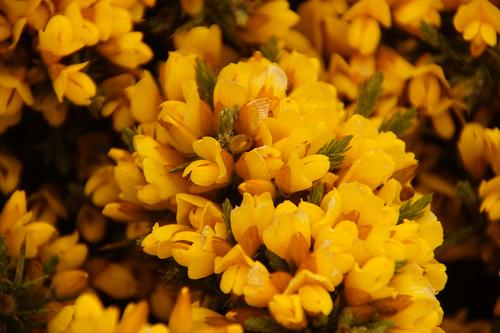246 Bloemen bij Gypsy Cove