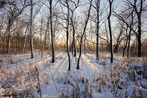 trees sunset snow ice frozen shadows goldenhour winterlandscape naturephotography ef1022mm oxbowpark