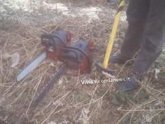 taglio alberi roccadaspide forestale 2