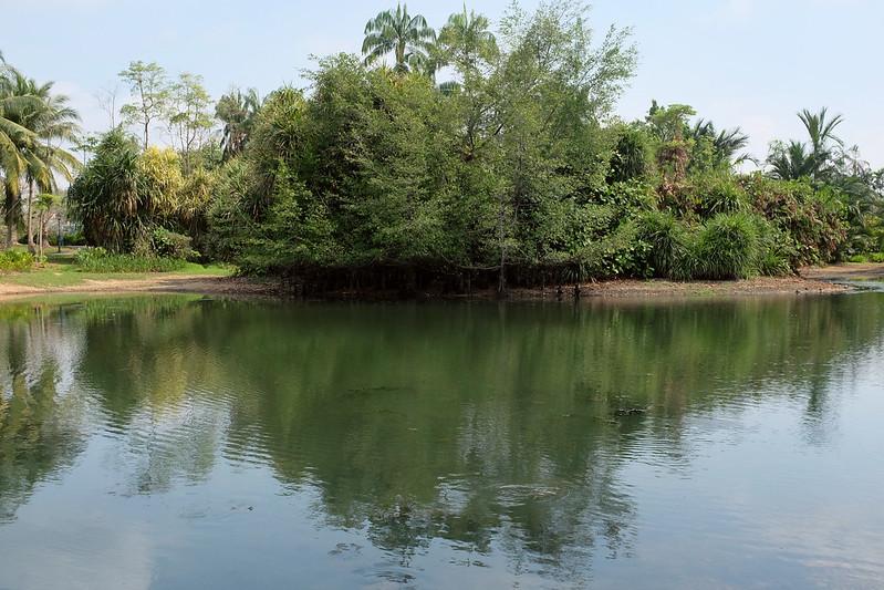Singapore Botanic Gardens Eco Lake drying up
