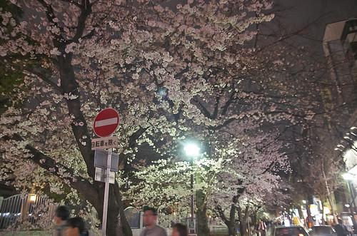 【写真】2014 桜 : 木屋町通/2021-09-17/IMGP5600
