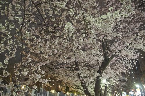 【写真】2014 桜 : 木屋町通/2021-09-17/IMGP5601