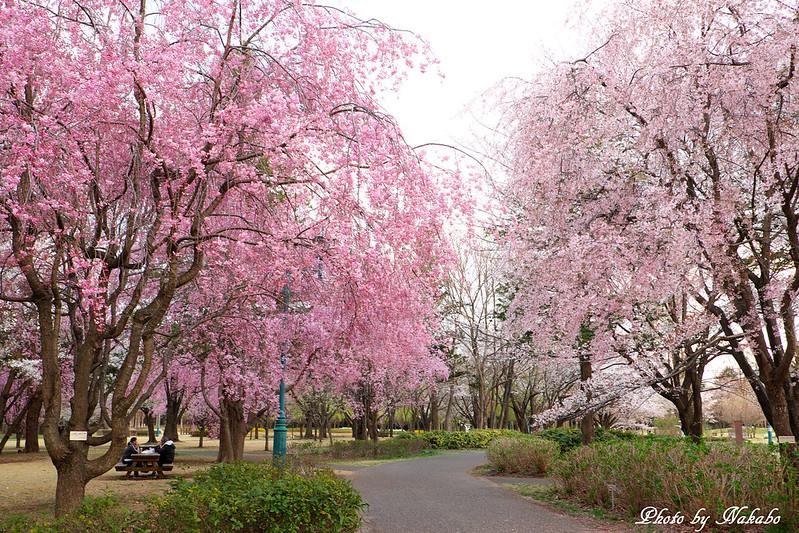 彩の森入間公園 by Nakabo