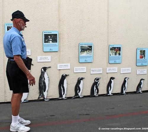 Pinguin Fuehrung klein copyr