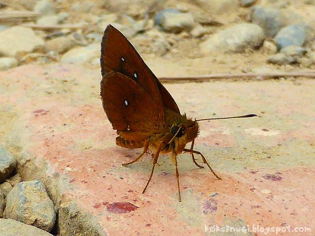 Kaeng Nyui Bike Trip Moth