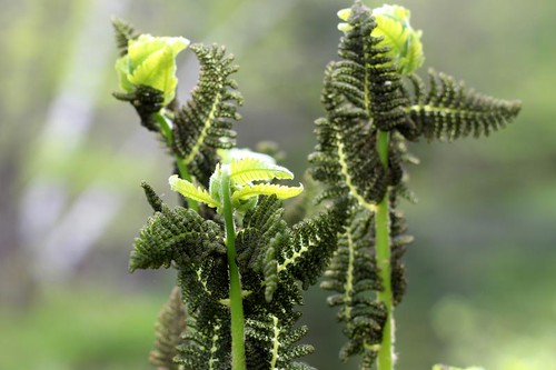 NewGrowth-5