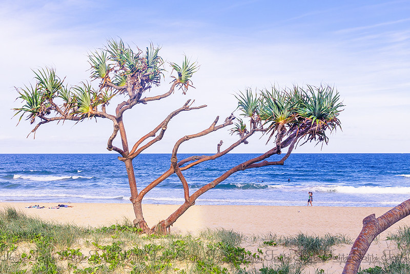 Gold Coast beach landscape with trees along the coastline
