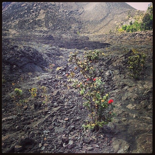 Flowers in the lava lake.