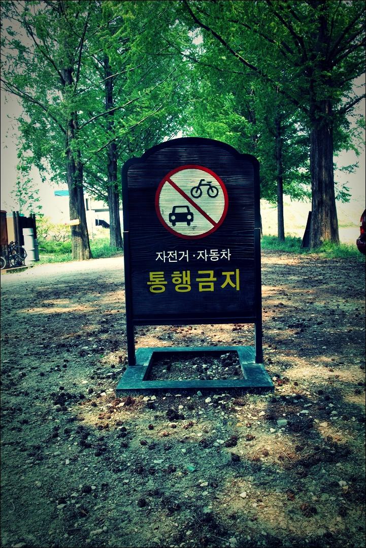 담양 메타세콰이어 길-'영산강 자전거 종주 Yeongsan_River_Bike_Riding'