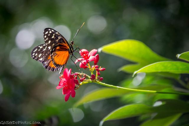 Butterfly on Flower 55/100