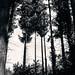 arbres by nicouze