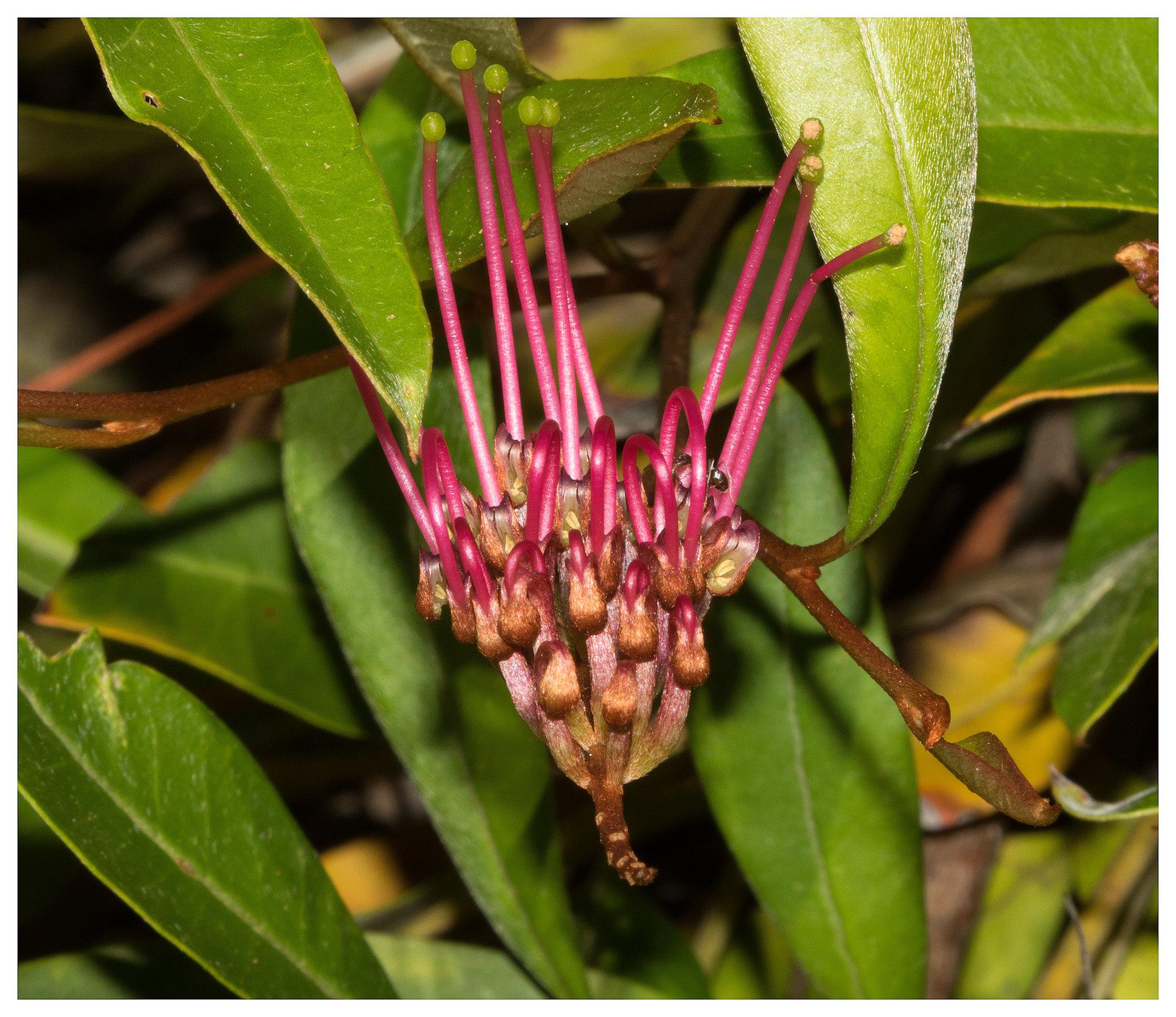 Hunter Region Botanic Gardens | Campervan Finder