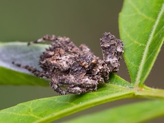 poop spiders