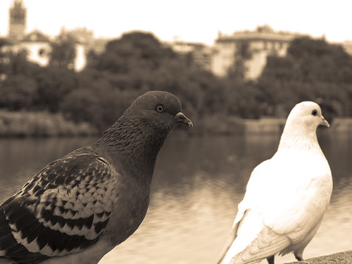 Las palomas y el río by Carlos_JG