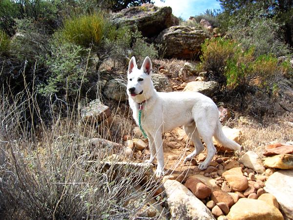 fleury enjoying the hike