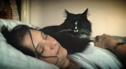 Nokia Lumia 1020 - Sleeping Lisa & Dolf (or 'A witch and her familiar') - Updated