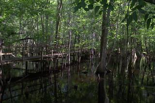 Beidler Forest