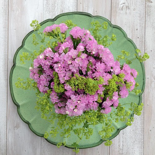 Friday morning flowers - pink Statice and Alchemilla mollis on vintage plate.