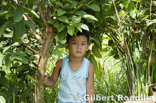 JB under the guava tree