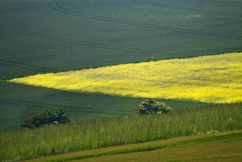 color colour canon sussex kent mr angles eastsussex bennett landcape ditchlingbeacon brightyellow yellowfields canon100400mm canon100400mmf4556lisusm canon7d mrbennettkent mbkwildlifephotography
