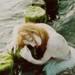 fire - algae by worteinbildern
