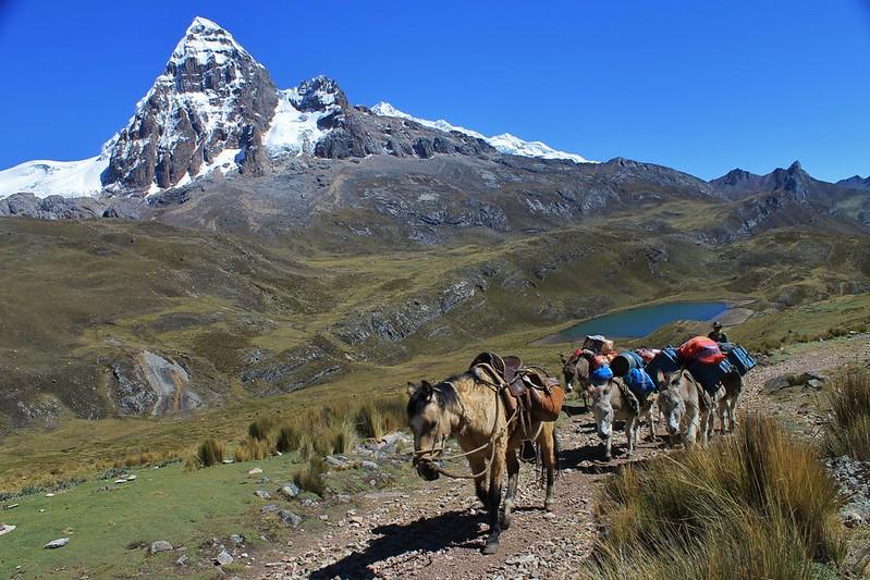 Donkey train climbing to Portachuelo de Huayhuash