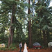 Redwood Camping Wedding by jasfitz | letsfrolictogether.com