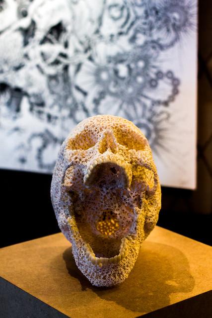 Coral skull