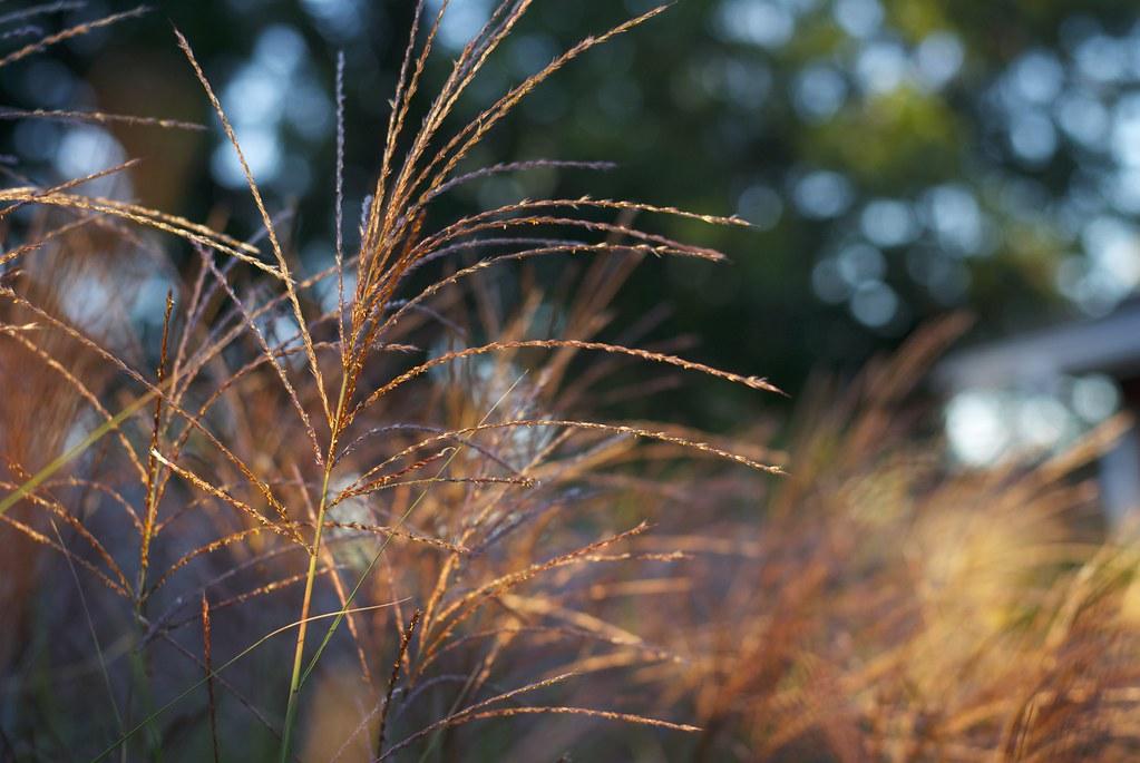 Glowing Grass