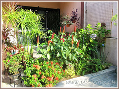 Our tropical garden's flowering and foliage plants at the inner bed, Oct 31 2013