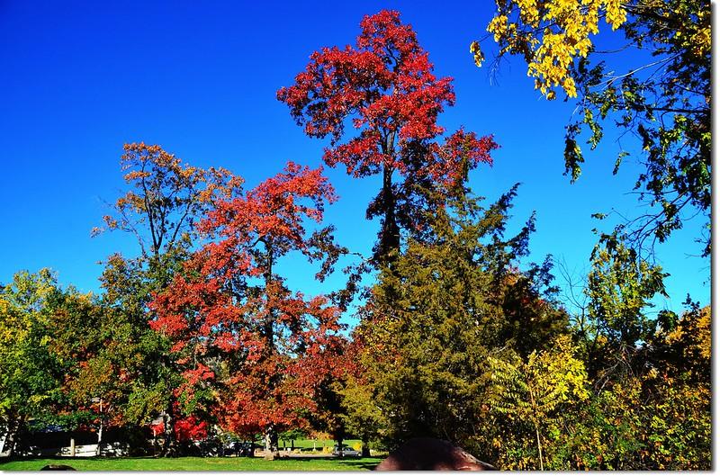 Oak(橡、櫟) in Fall, Chautauqua, Boulder 5