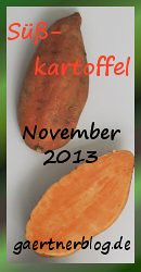 Garten-Koch-Event November 2013: Süßkartoffel [30.11.2013]