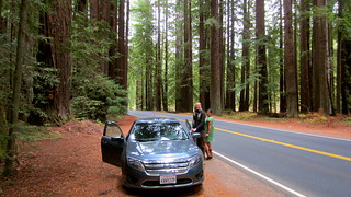 road trip through the redwoods