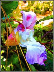 Flowers & Irises