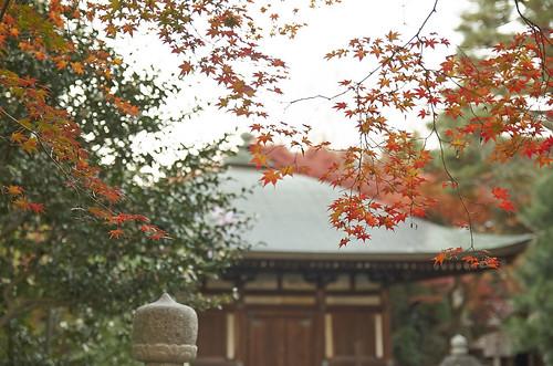 【写真】2013 紅葉 : 白沙村荘/2020-12-28/IMGP3711