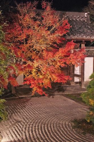 【写真】2013 紅葉 : 天授庵/2020-05-17/IMGP3756