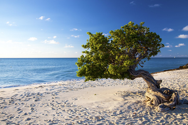 Divi divi tree aruba flickr photo sharing - Divi beach aruba ...