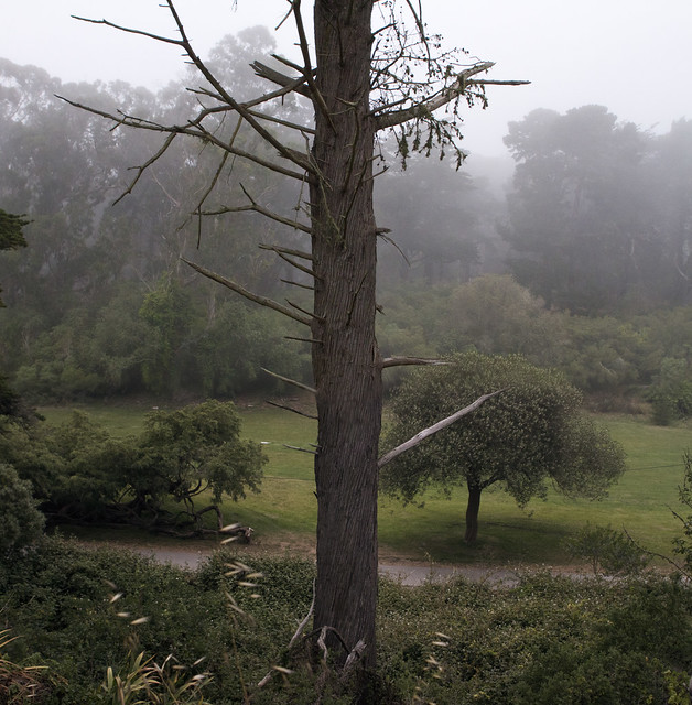 Golden Gate Park in the fog.  San Francisco (2012)