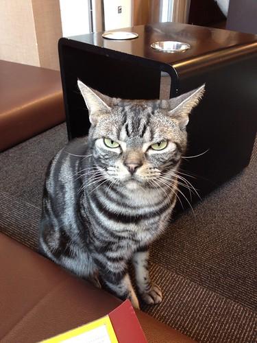 Mastermind Cat