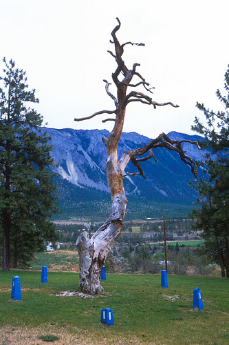 Hangman's Tree in Lillooet on the Fraser River, Gold Country, Cariboo, British Columbia