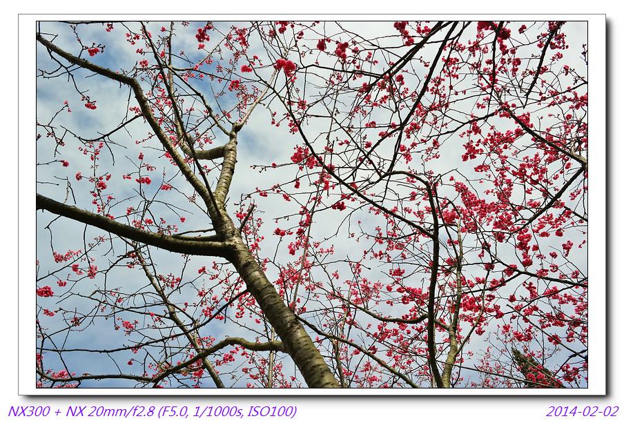 春節隨手拍3張~