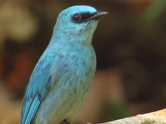 roller(0.0), jay(0.0), emberizidae(0.0), animal(1.0), wing(1.0), fauna(1.0), finch(1.0), close-up(1.0), bluebird(1.0), beak(1.0), bird(1.0), wildlife(1.0),