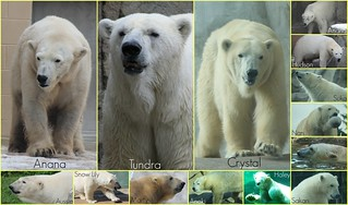 Happy International Polar Bear Day!