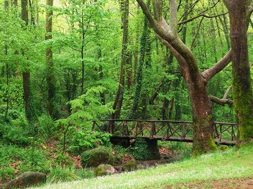 wood bridge plants tree green nature outdoors