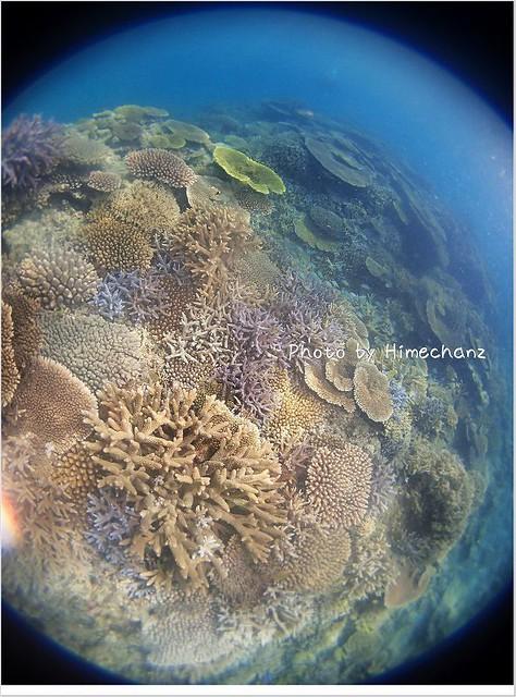 どこまでも続くサンゴの景色
