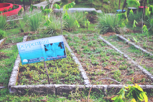 herb-garden-gawad-kalinga-enchanted-farm