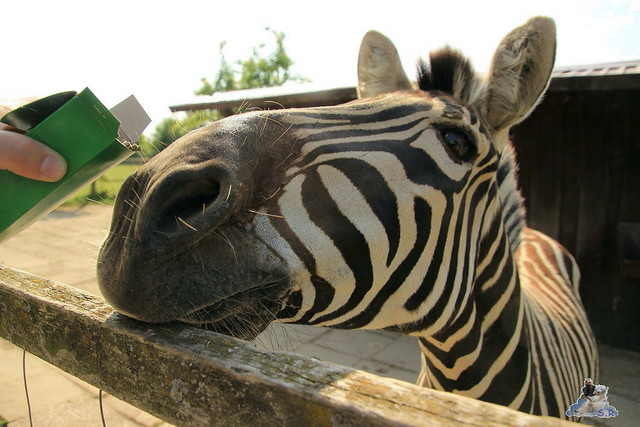 Tierpark Krüzen 03.07.2015  72