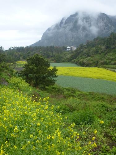 Co-Jejudo-Seogwipo-Sentier Olle 10-Sanbangsan (18)